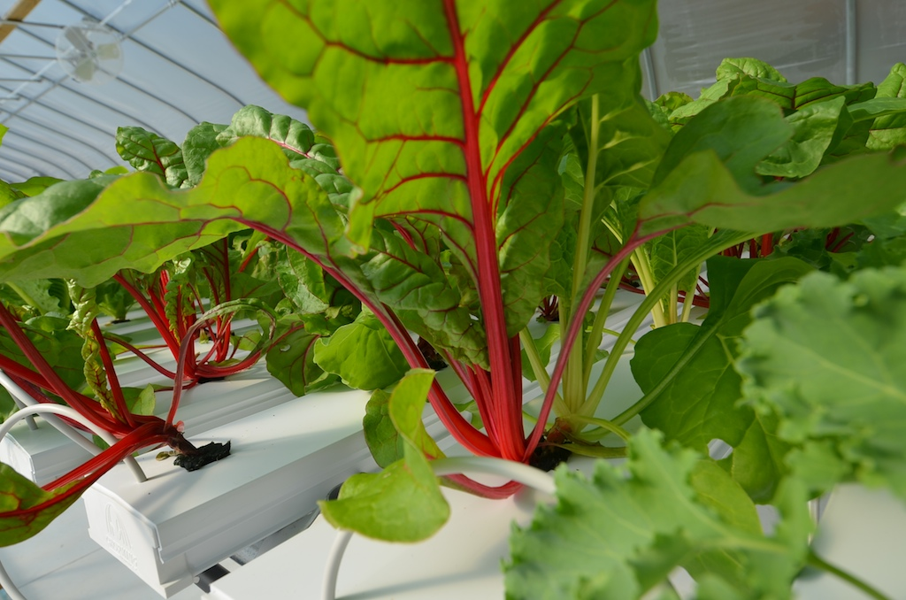 greenhouse  880 (1).jpg