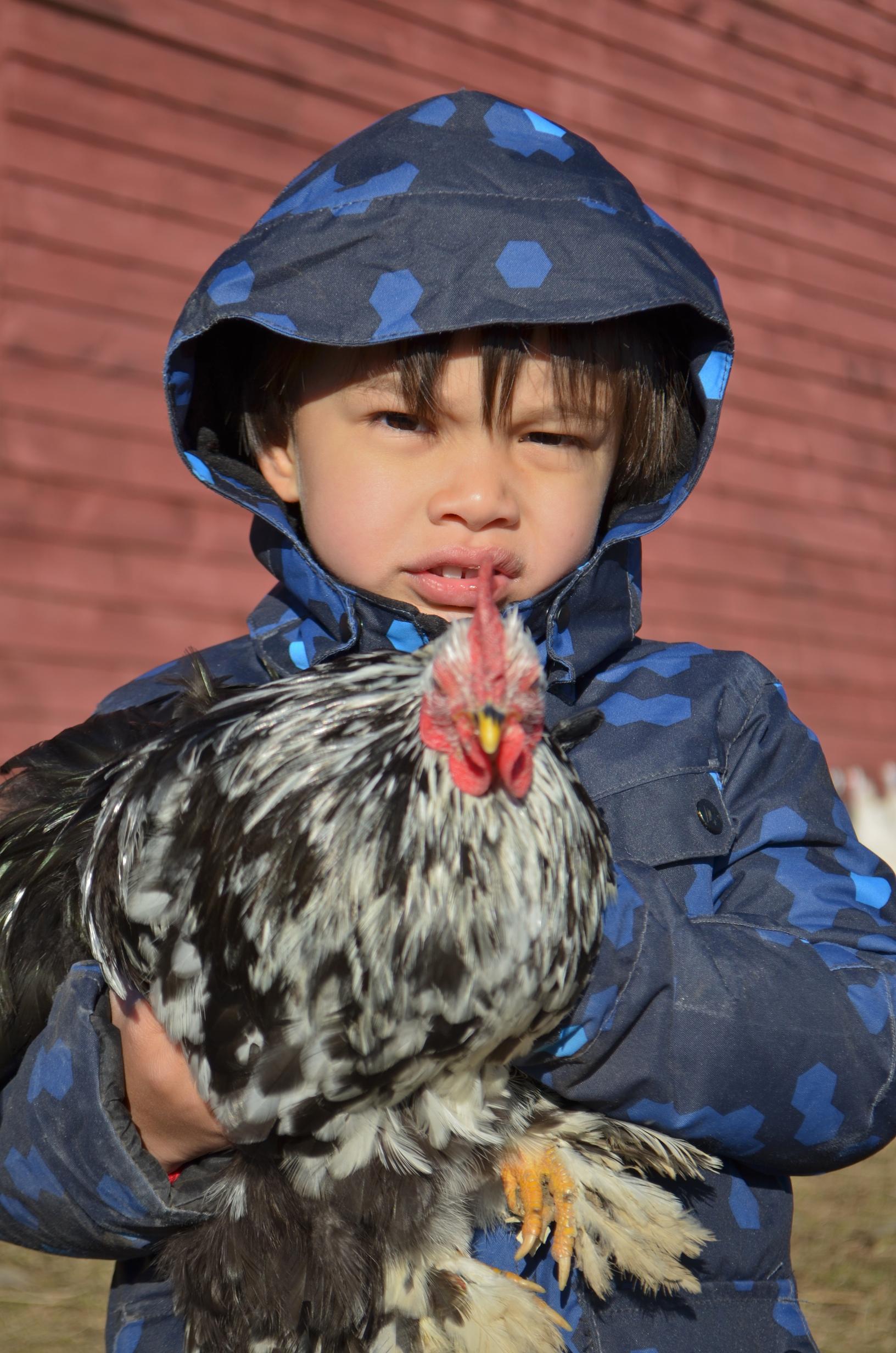 egglayer  1010.jpg