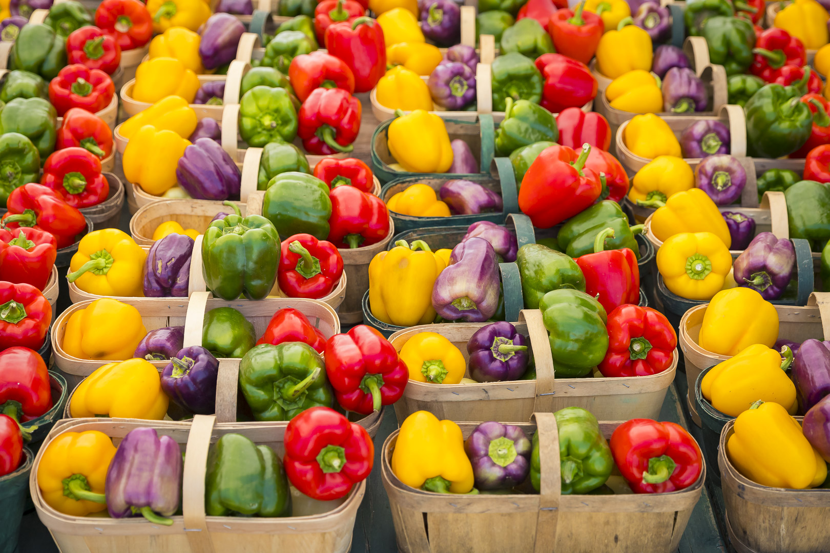 Yellow, Purple, Green and Red Sweet Peppers