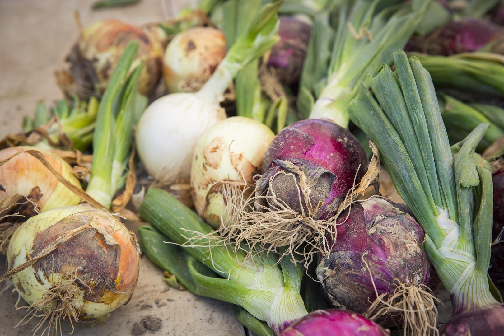 A Mix of Onions