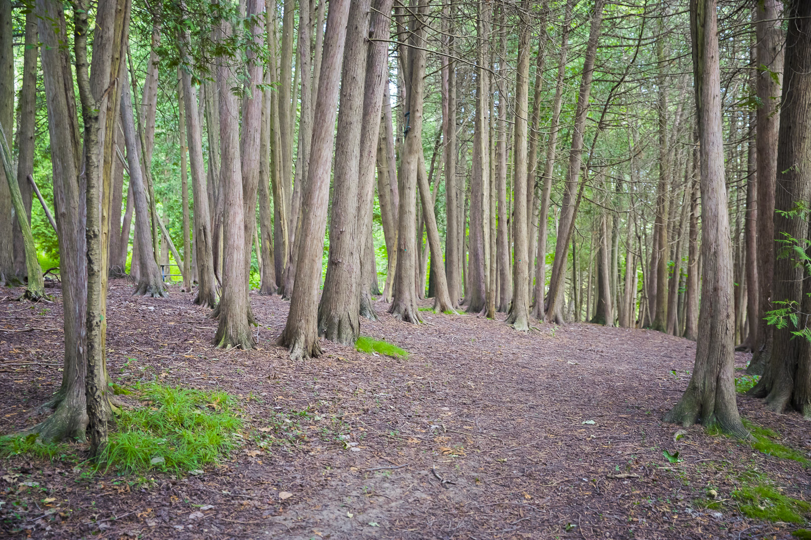 Trees @ Victoria Park