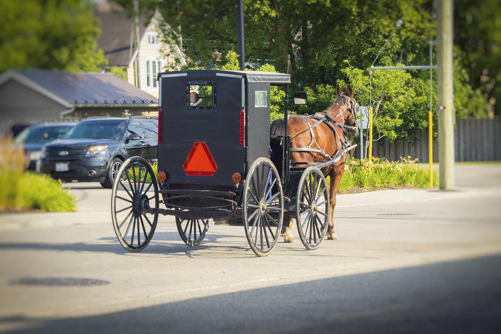 Mennonite Horse & Buggy