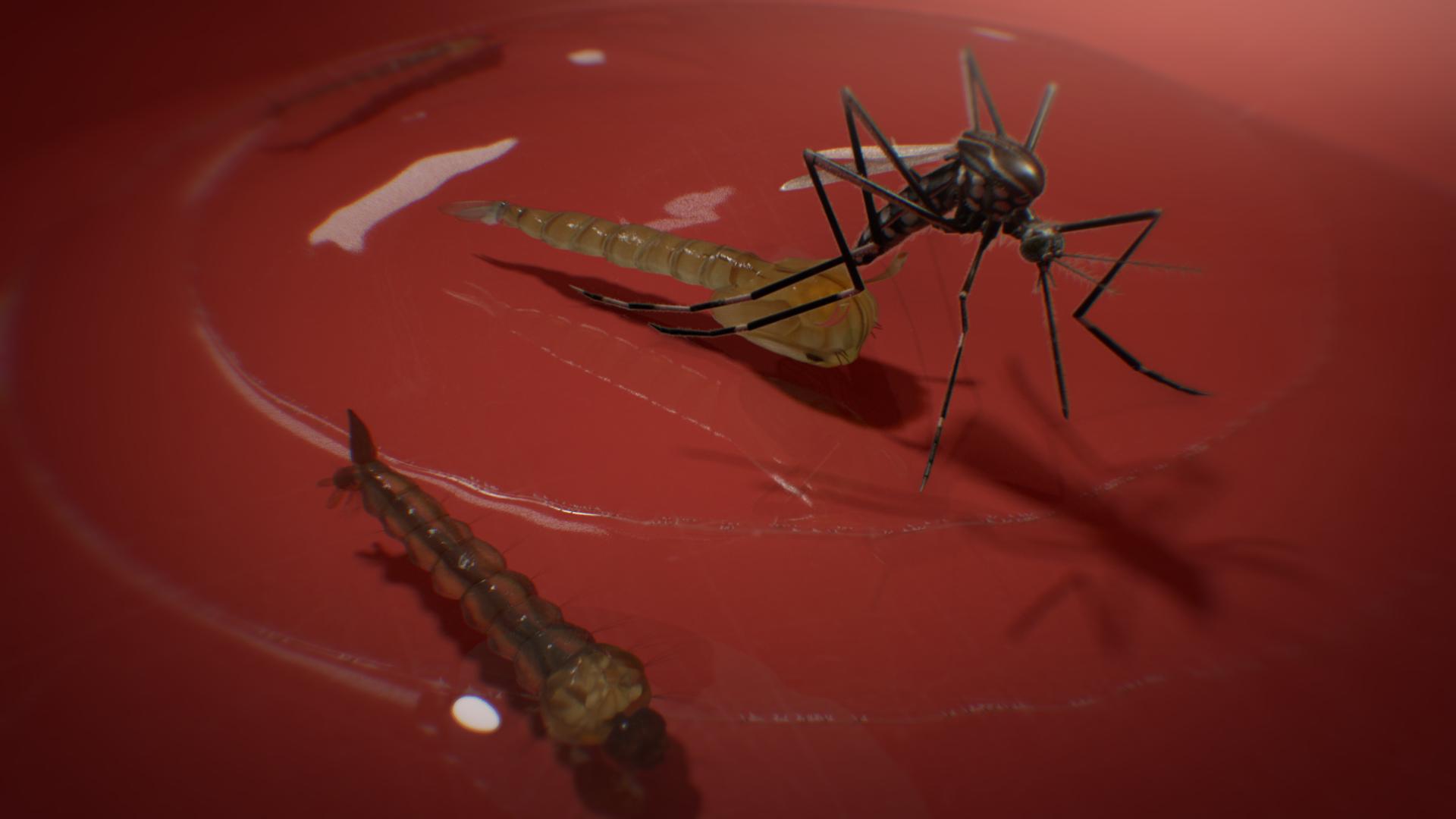 LRA_NEA_Dengue_Frame_11_Styleframe_001.png