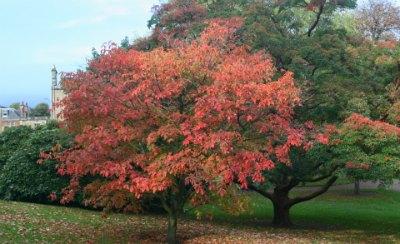 Autumn colour in Edinburgh's Royal Botanic Gardens