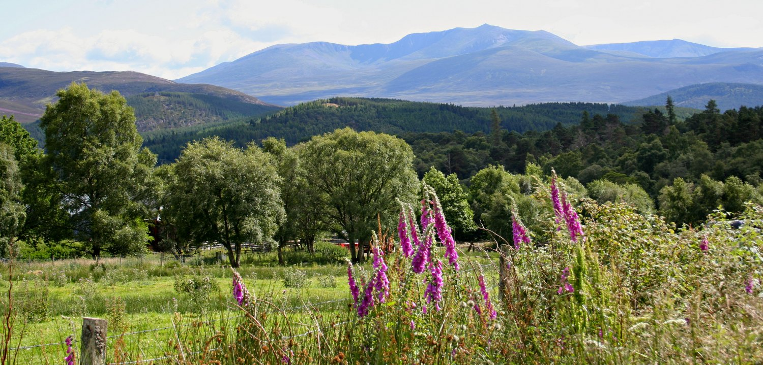 Looking south from the B976 to the steep frowning glories of darrrrk Lochnagarrrrrrrrr. (Well, that's how they sing the song.) Foxgloves in flower in the foreground.