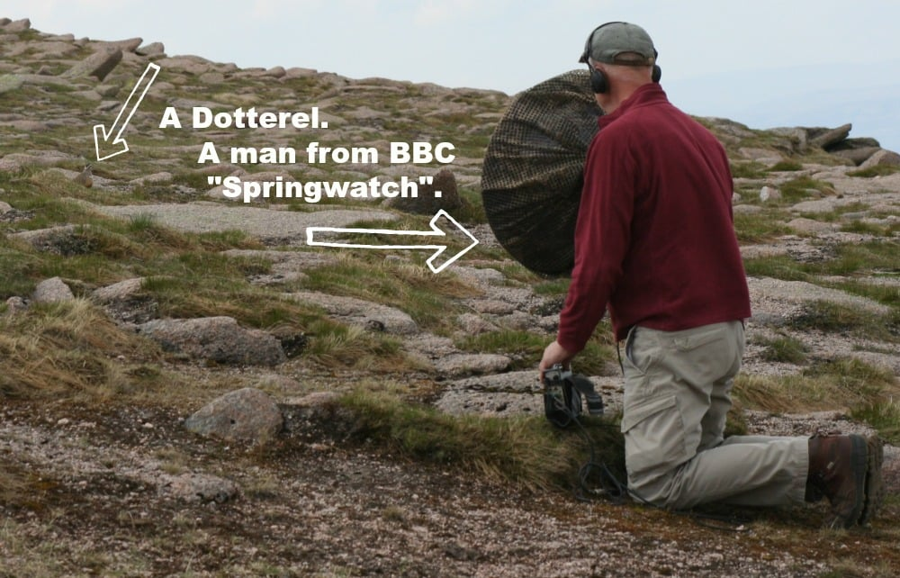 No peace for dotterel near the top of Cairngorms. Here's a sound-man from BBC's 'Springwatch'.