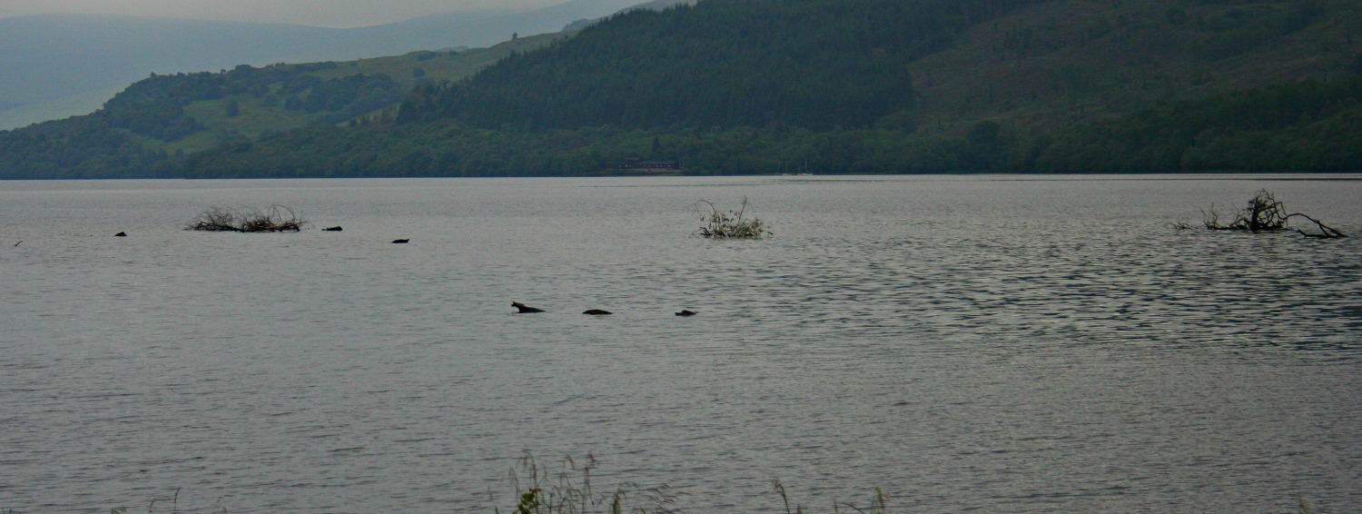 Nessie - no, a tree branch - in Loch Tay