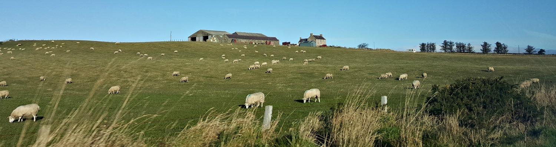 Buchan farm