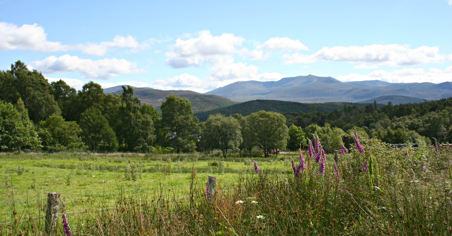 A distant view of Lochnagar from the north. It's high summer and the mauve foxgloves are in flower.