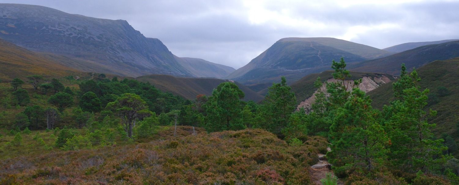 Cairngorms in autumn.