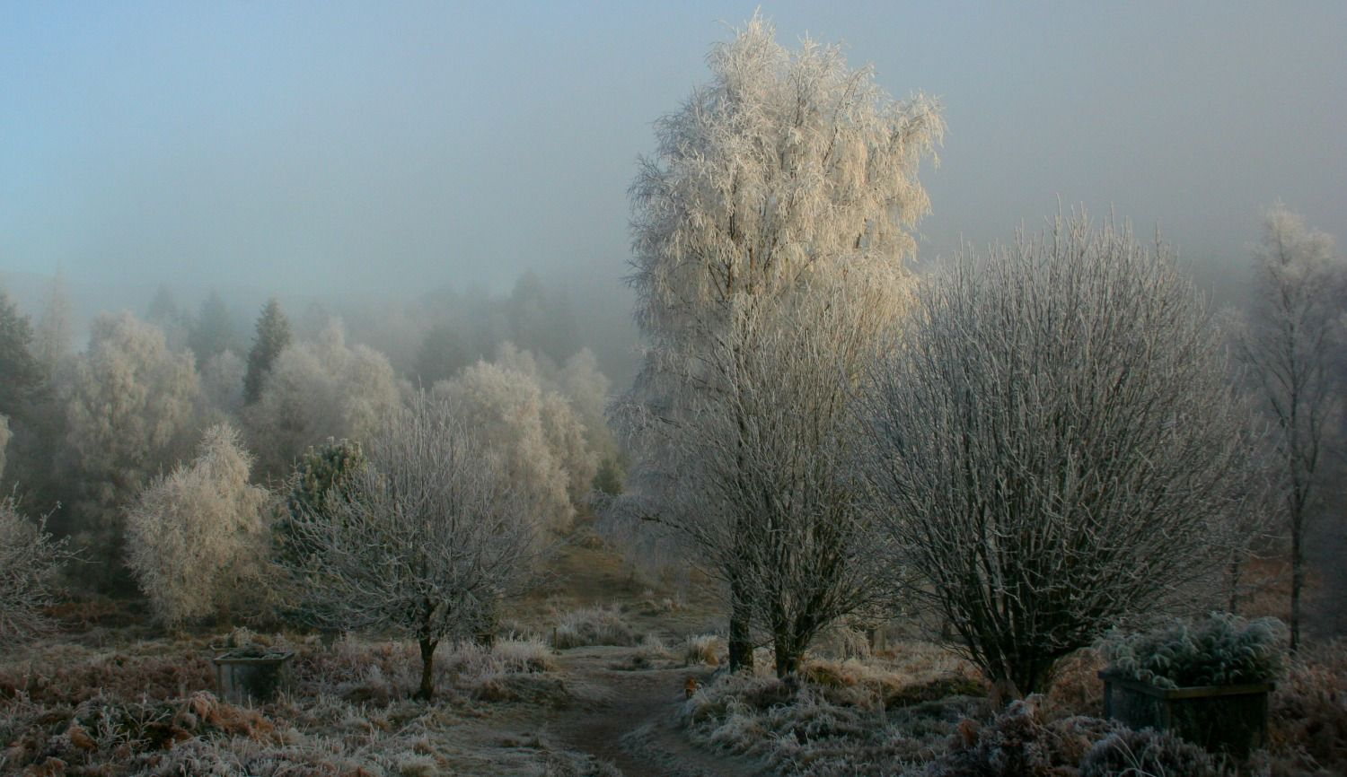 Top of the Knock Hill, Crieff, Perthshire in hard frost.