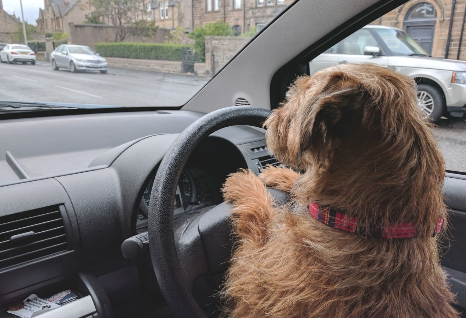 Admittedly, he does find the clutch a bit of a struggle. It's his short terrier legs. Note to self: the next car will be an automatic.