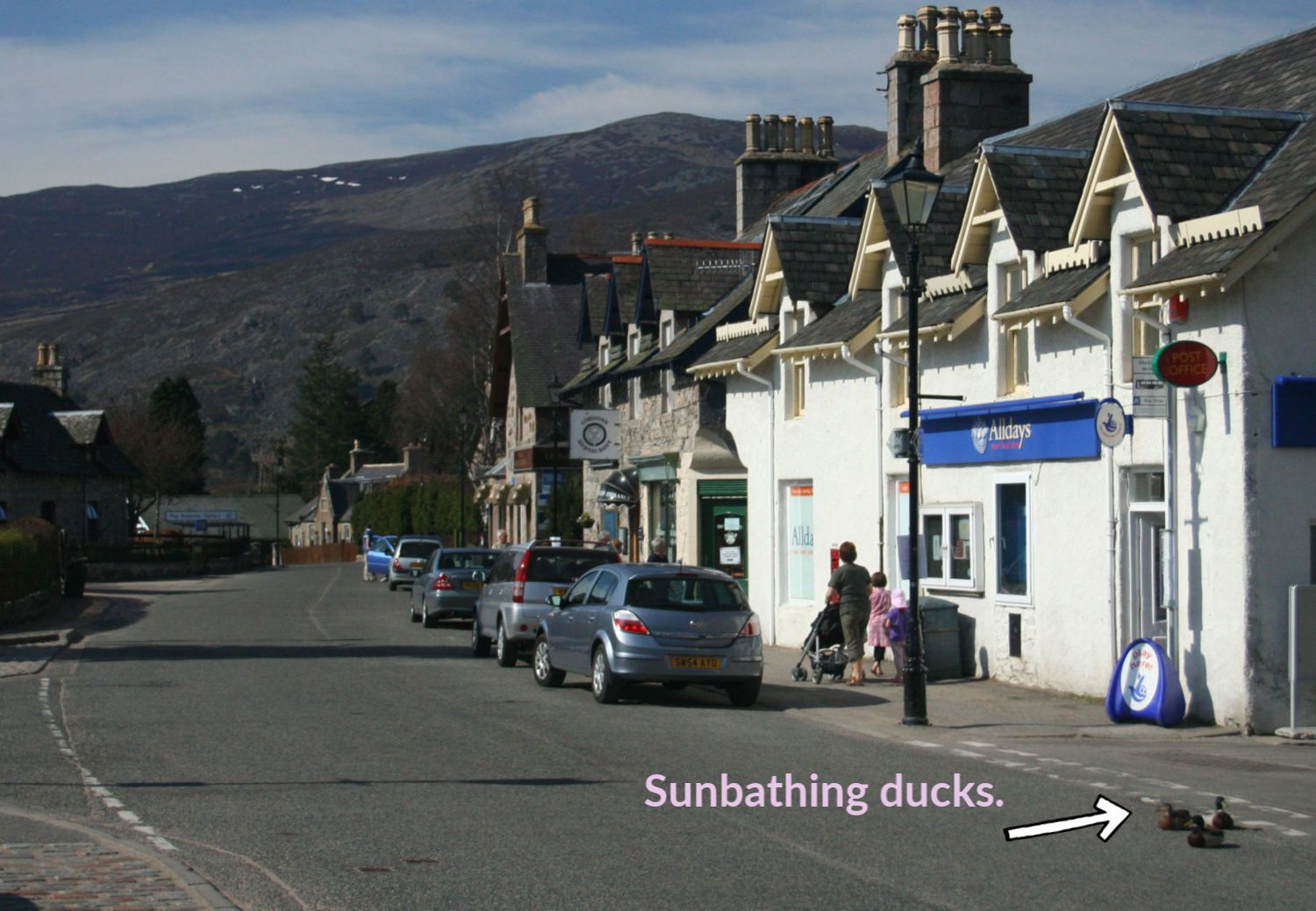 My final proof that it can be freakily warm sometimes in Scotland. Braermar main street and the ducks are feeling the heat. (They are also, unaccountably, feeling the street.) DATE: As above 13 April 2007.