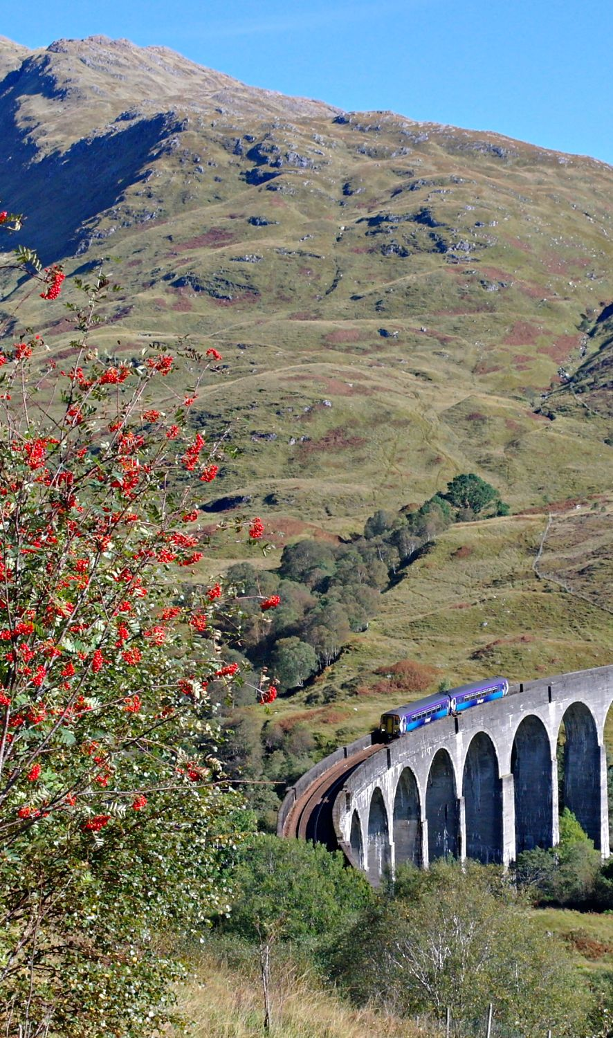 A 'regular' service crosses the Glenfinnan Viaduct (aka 'The Harry Potter Bridge') en route for Fort William. (If I'd waited, oh, a couple of hours while being  eaten by midges , I would have seen the Jacobite steam-hauled train. Hmm, perhaps another time…)