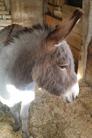 Meet our new donkey Hodie!