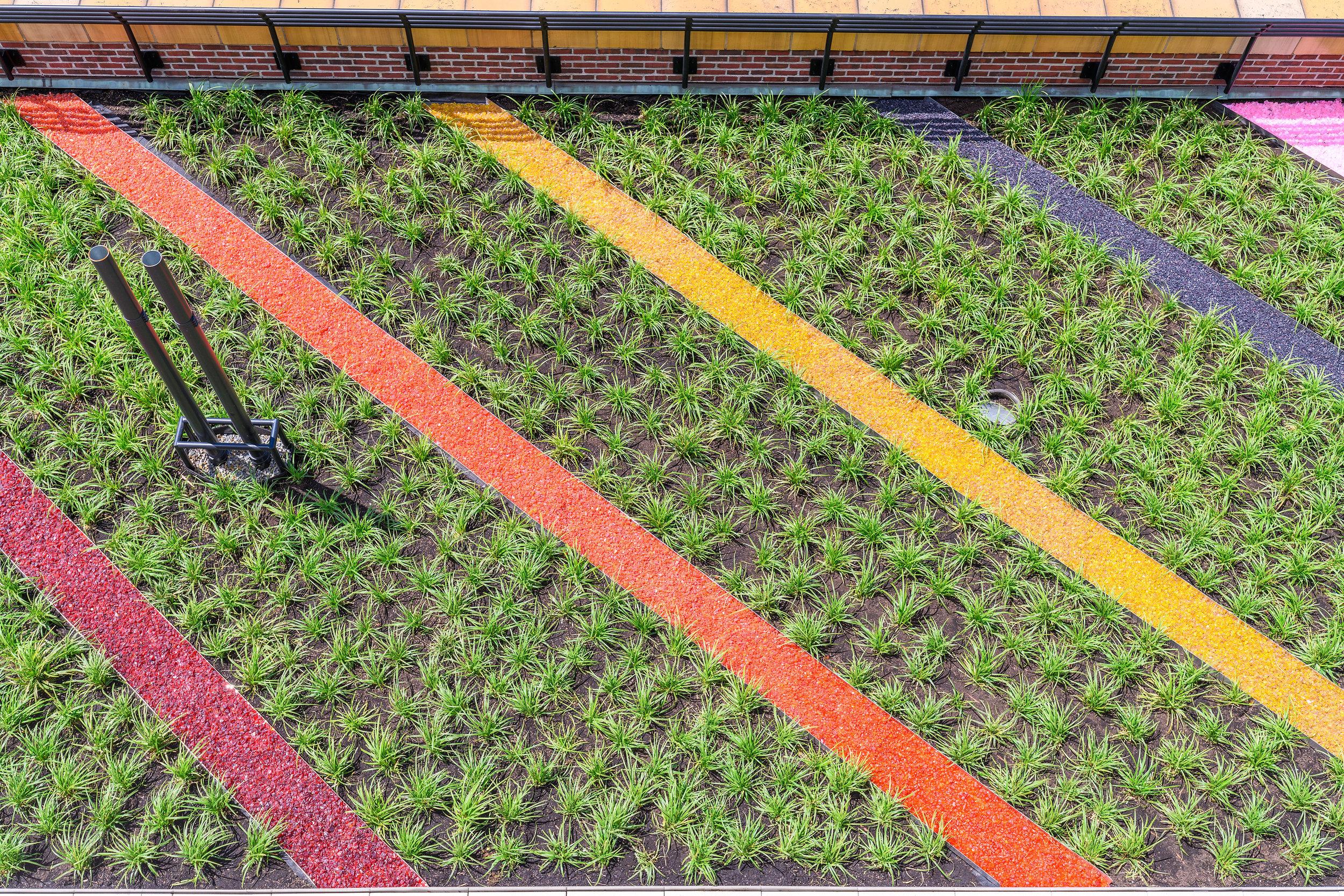 Plantus-Spring19-27.JPG
