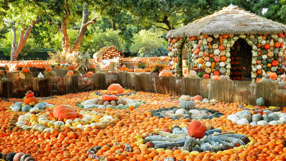 Pumpkin Patch at the Dallas Arboretum, Dallas, TX