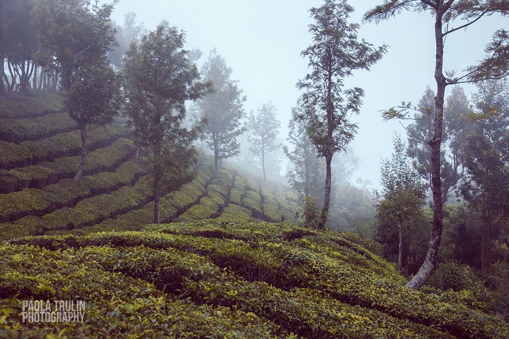 munnar_fog-(1-of-1)-Edit.jpg