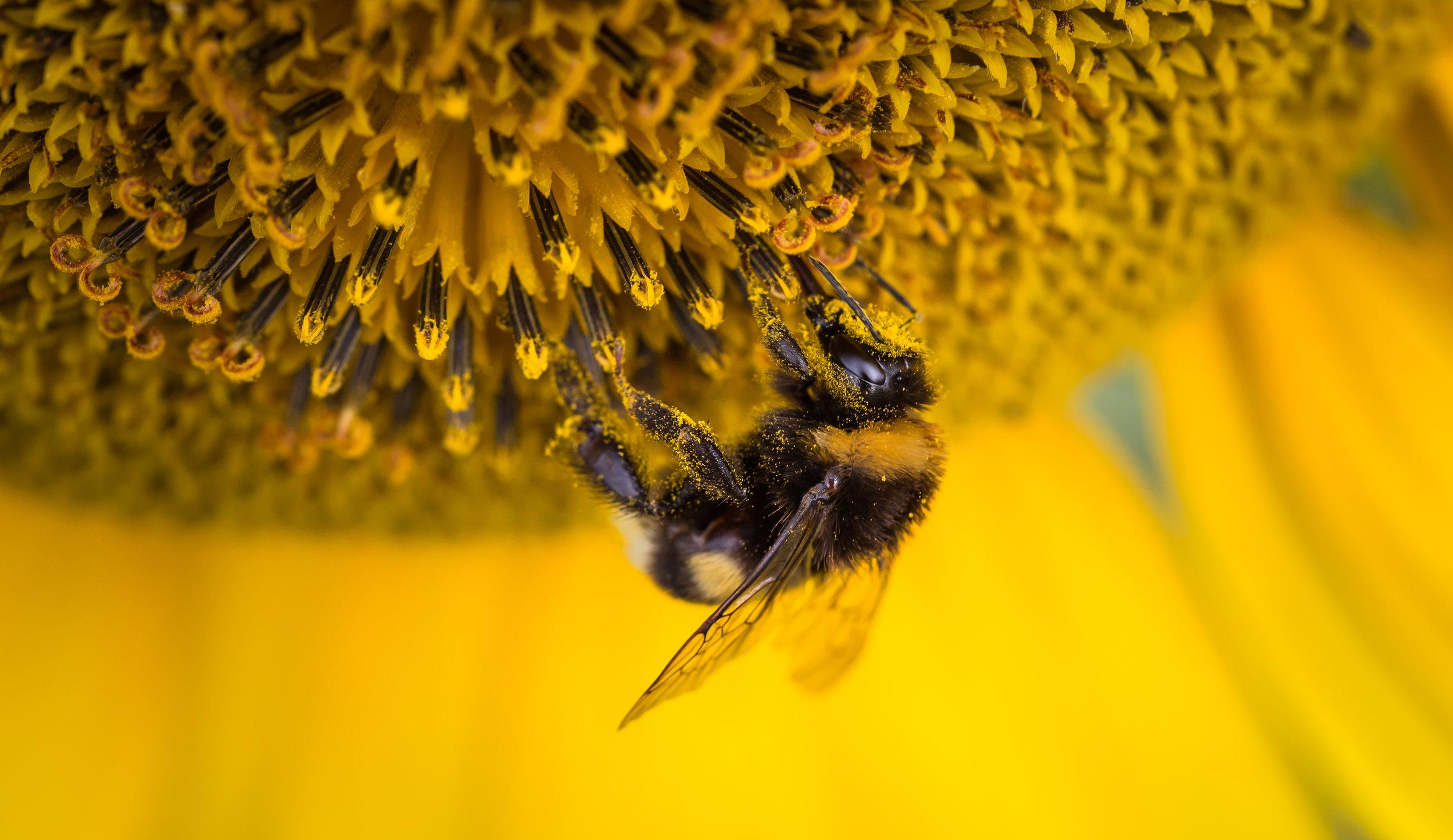 pollinationoverdrive.jpeg