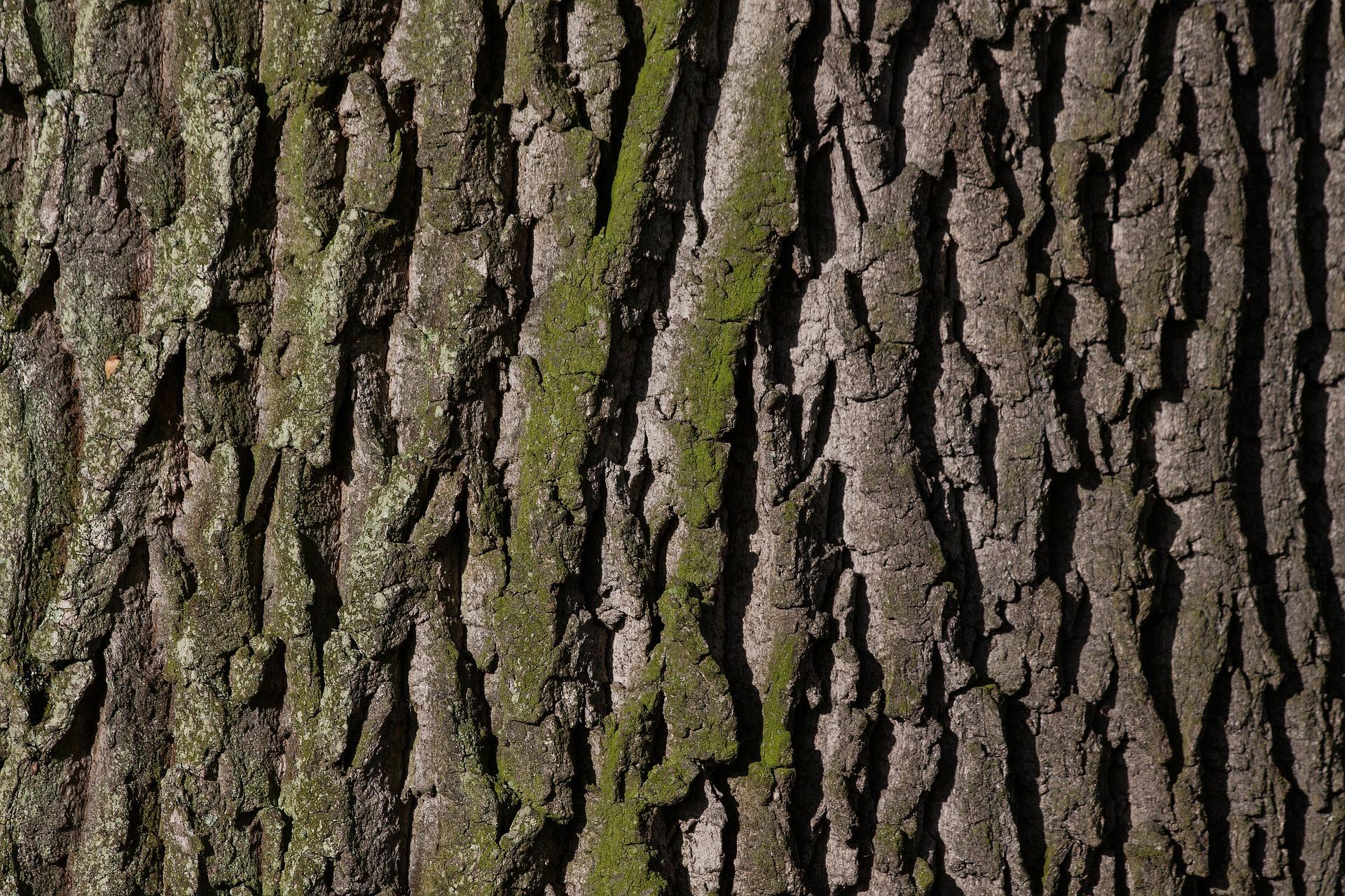 bark-207252_1920.jpg