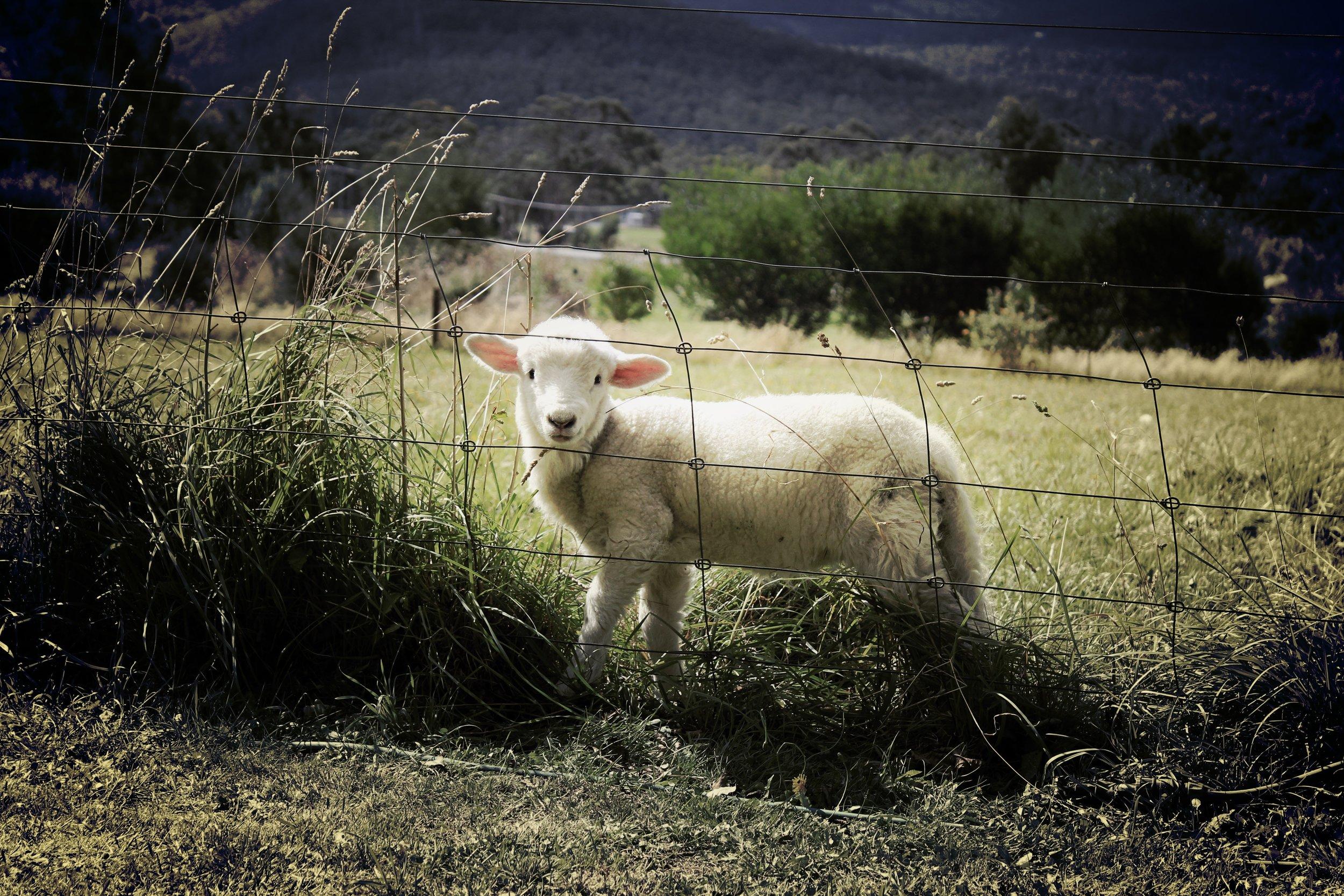 animal-countryside-farm-47078.jpg
