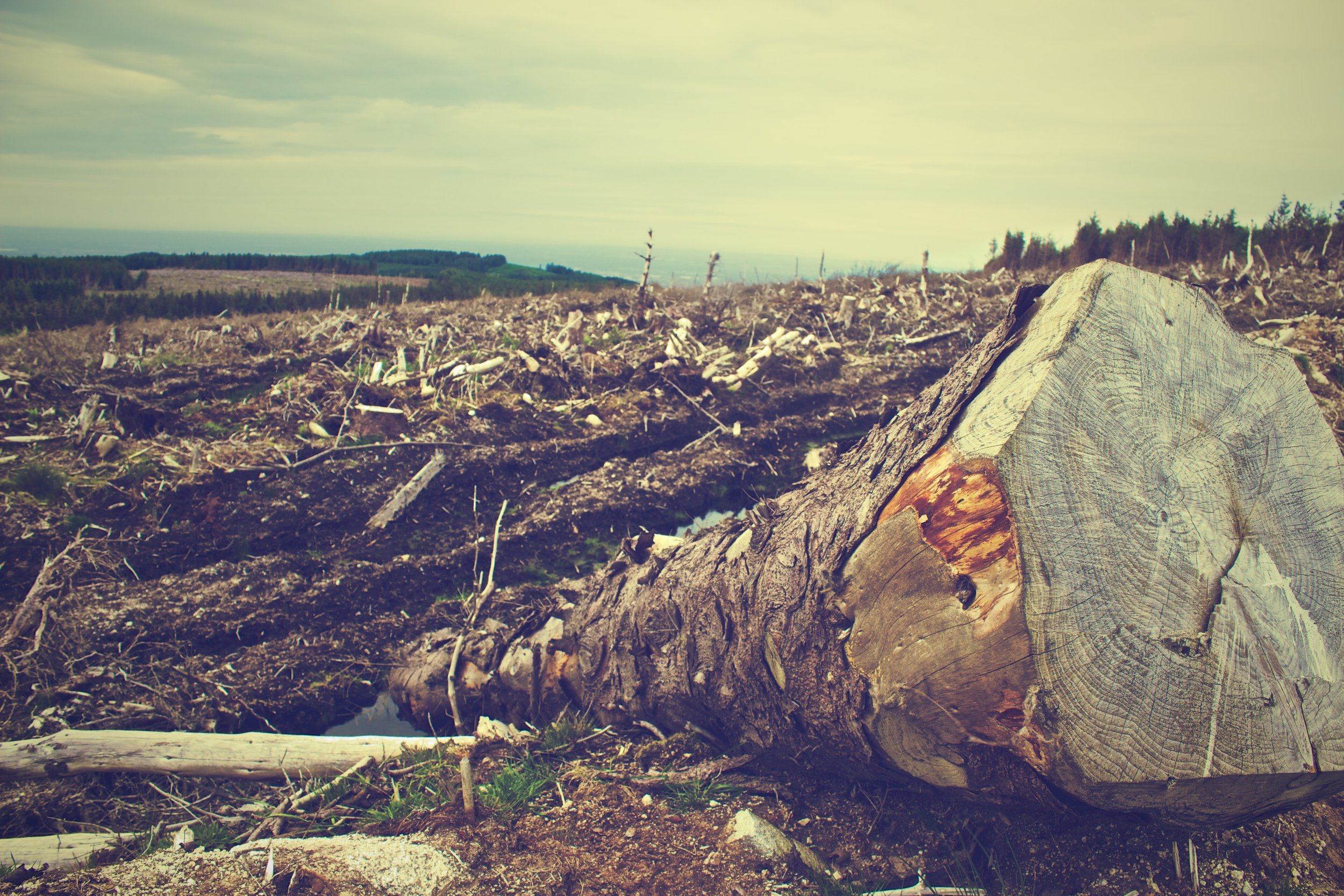 clearing-desolation-destruction-4451.jpg