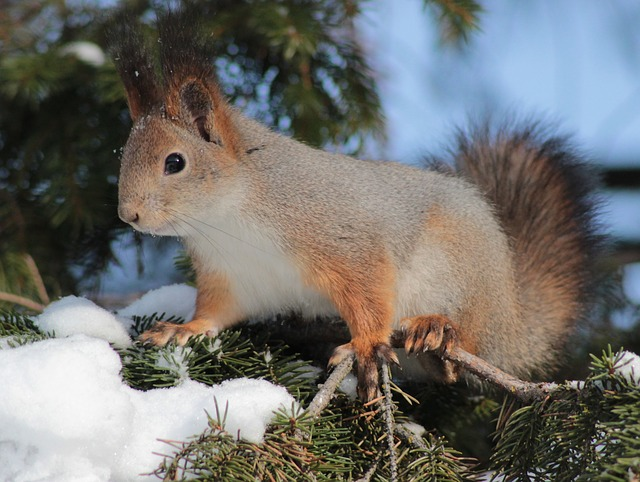 squirrel-86506_640.jpg