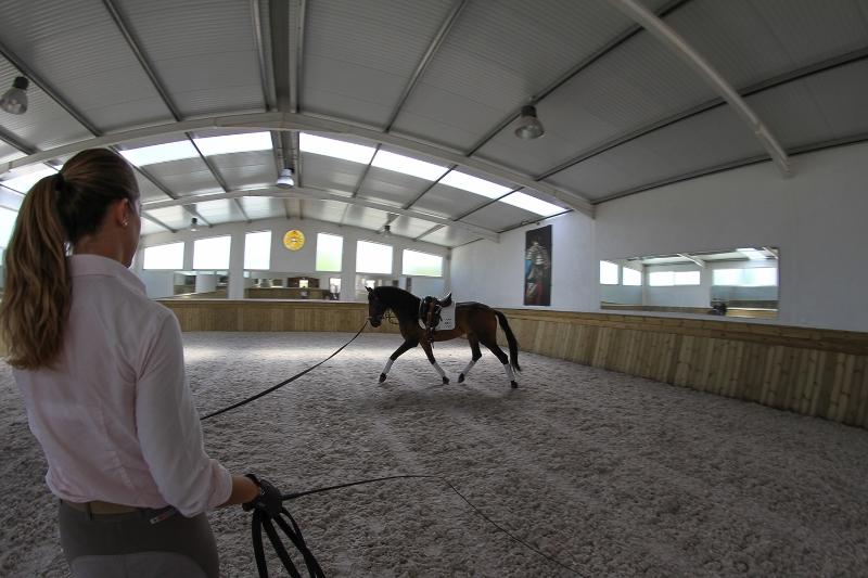 Equitation Lesson in Santarém