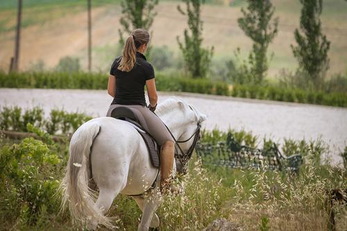 Nacional Horse Fair in Golegã