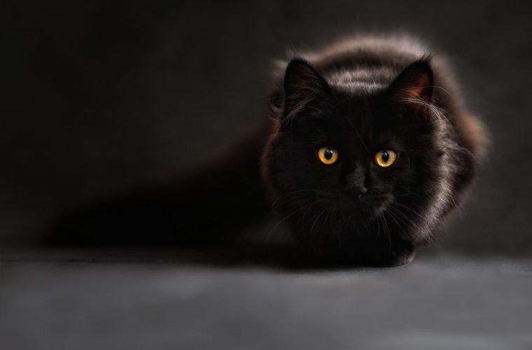 black-759x500.jpg