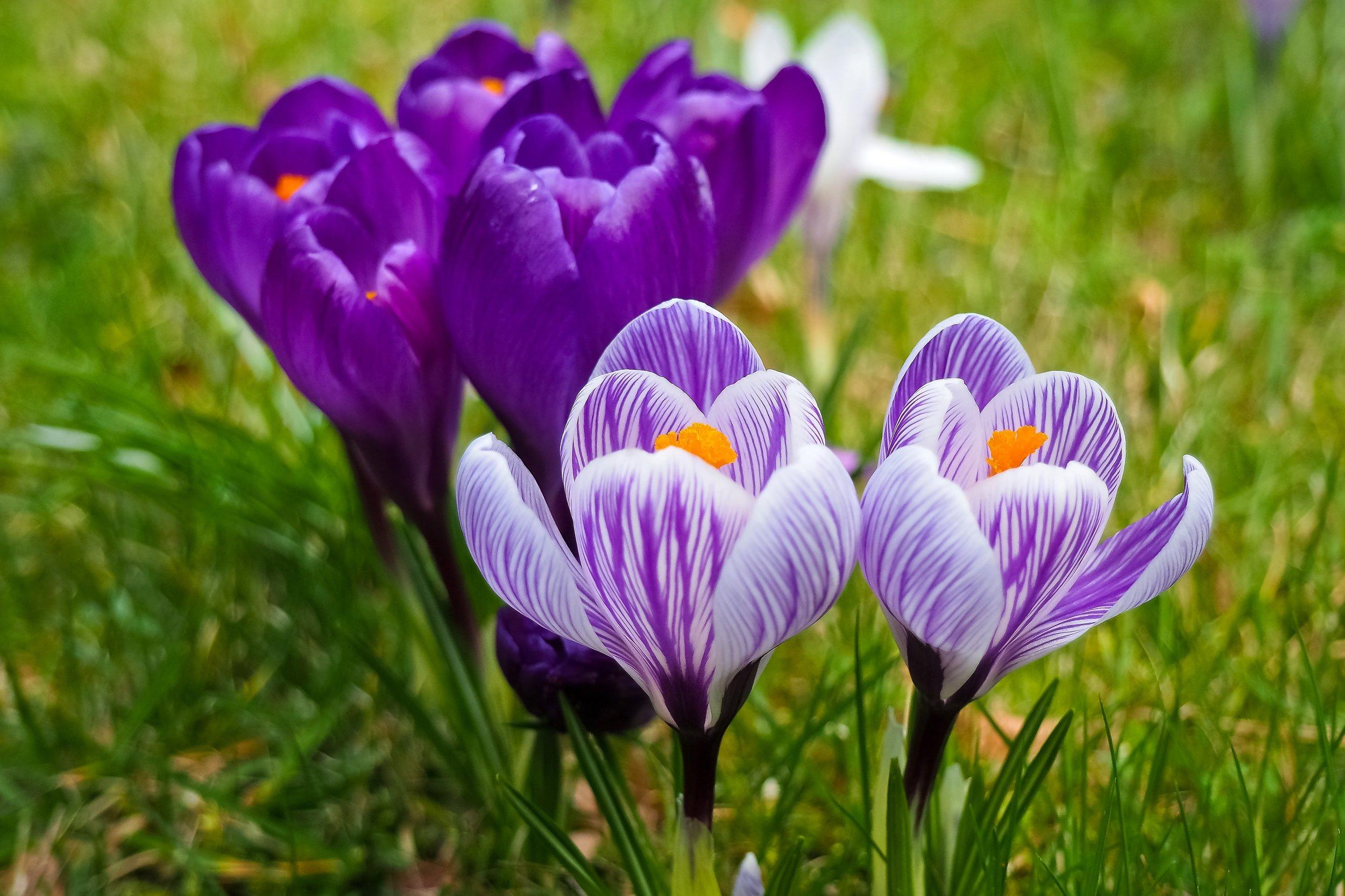 bloom-blooming-blossom-355663.jpg