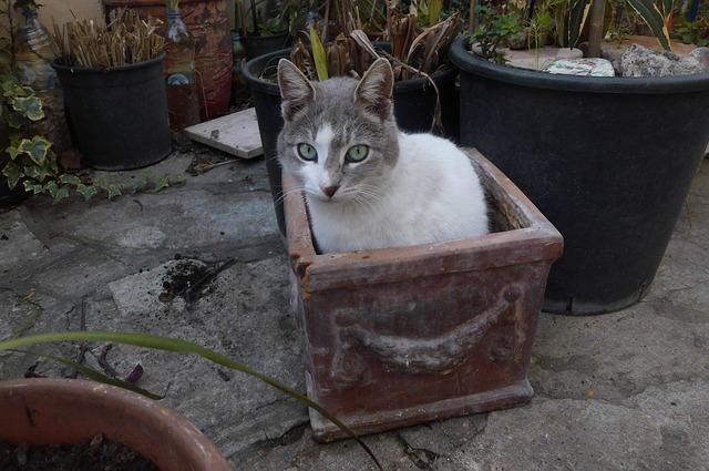 cat-1159288_640.jpg