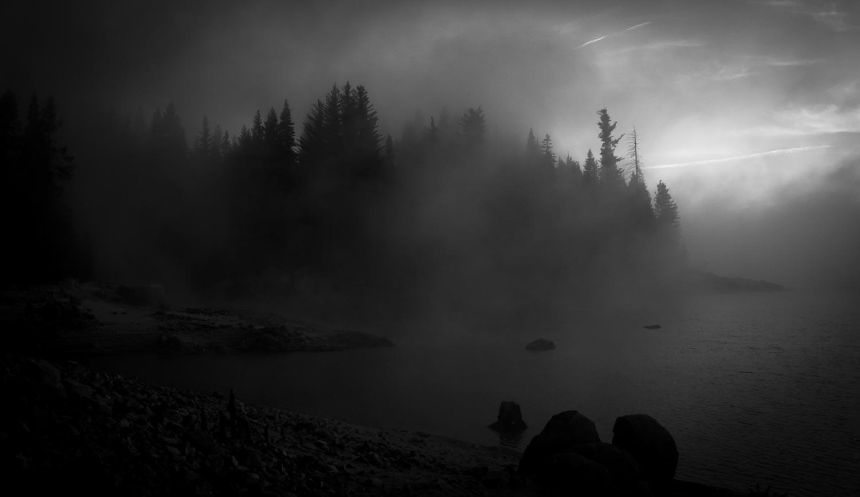 Foggy Pines BW.jpg