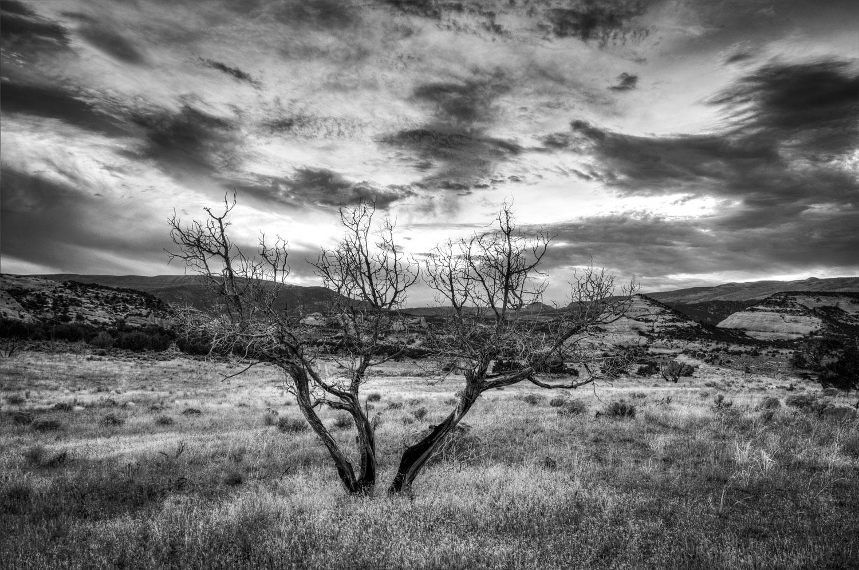 BW-Tree.jpg