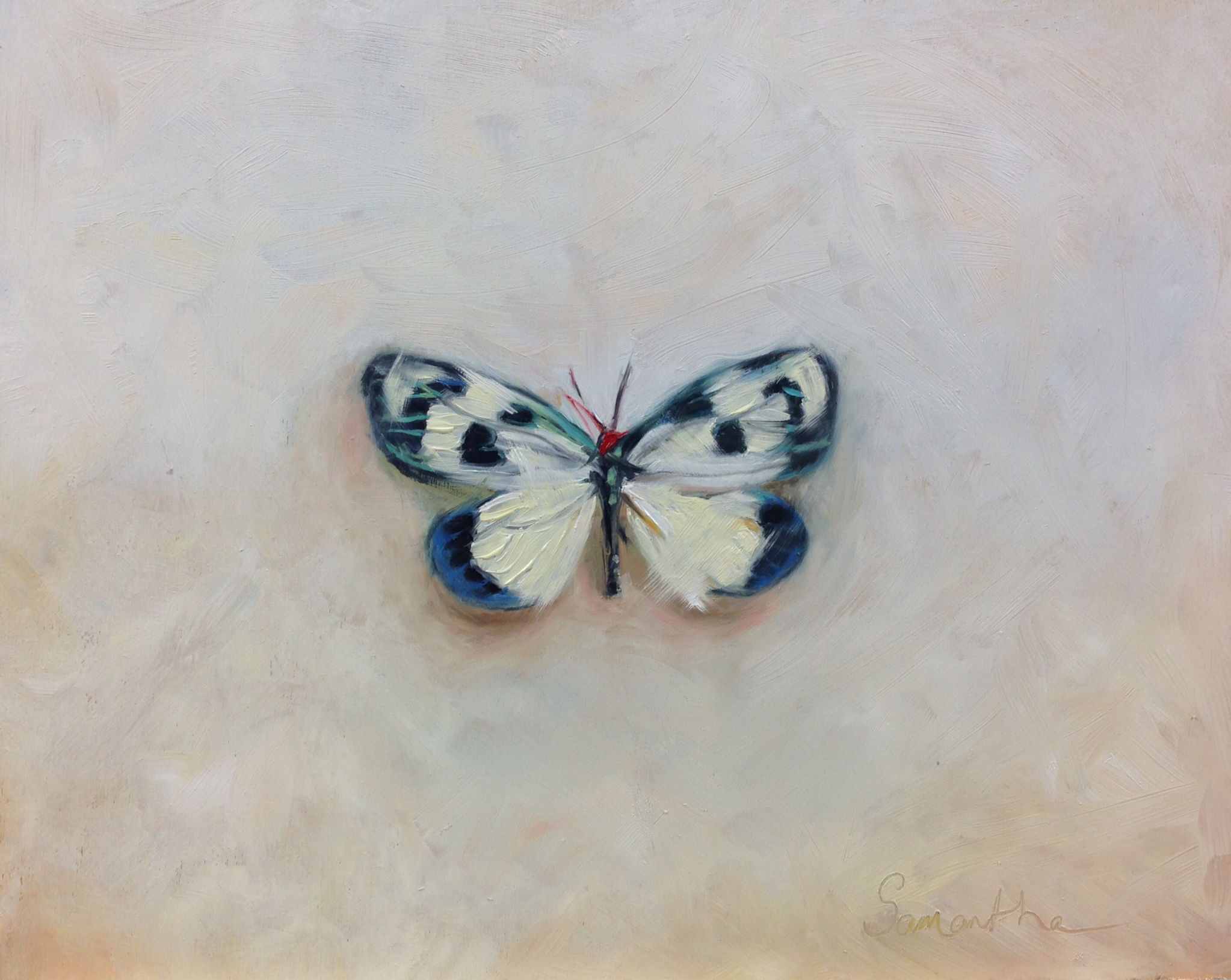 Chalcosia Thaivana-butterfly.jpeg
