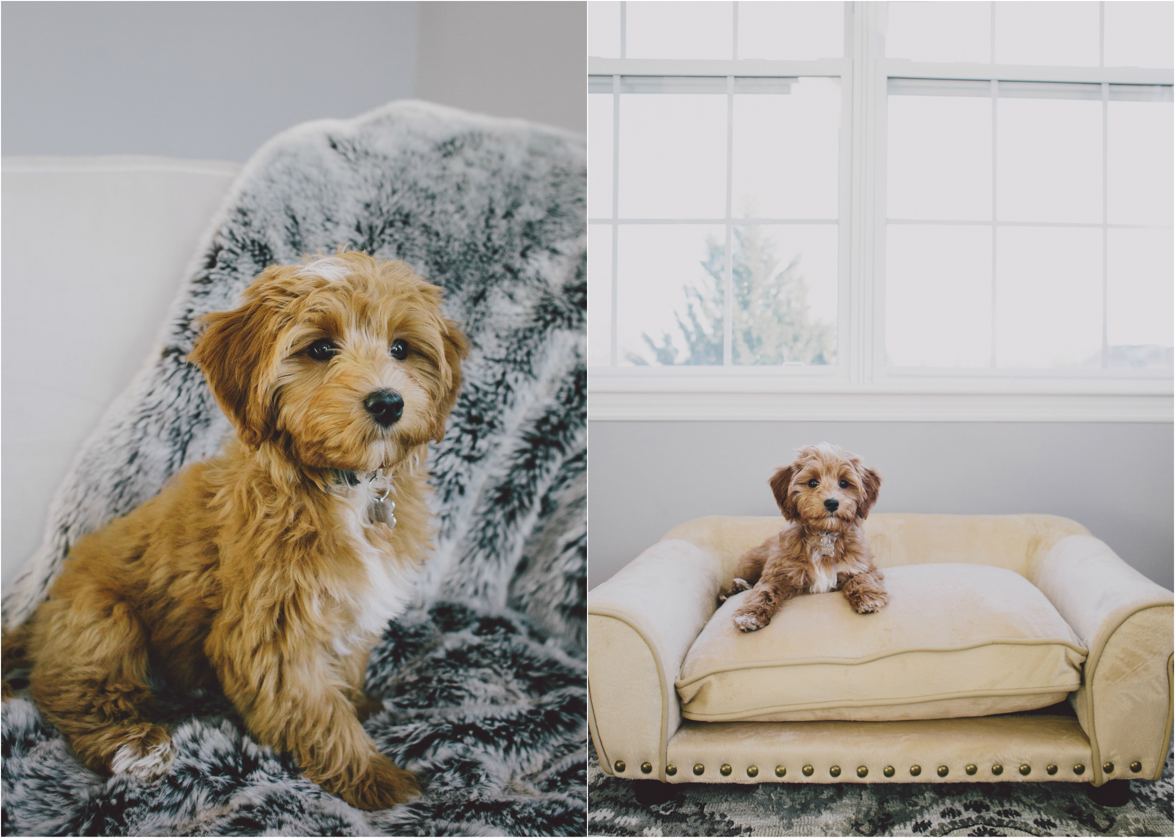 NY pet photographer