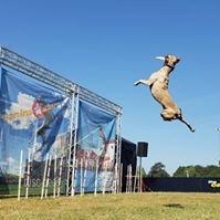Dog+Stunt+Show.jpg