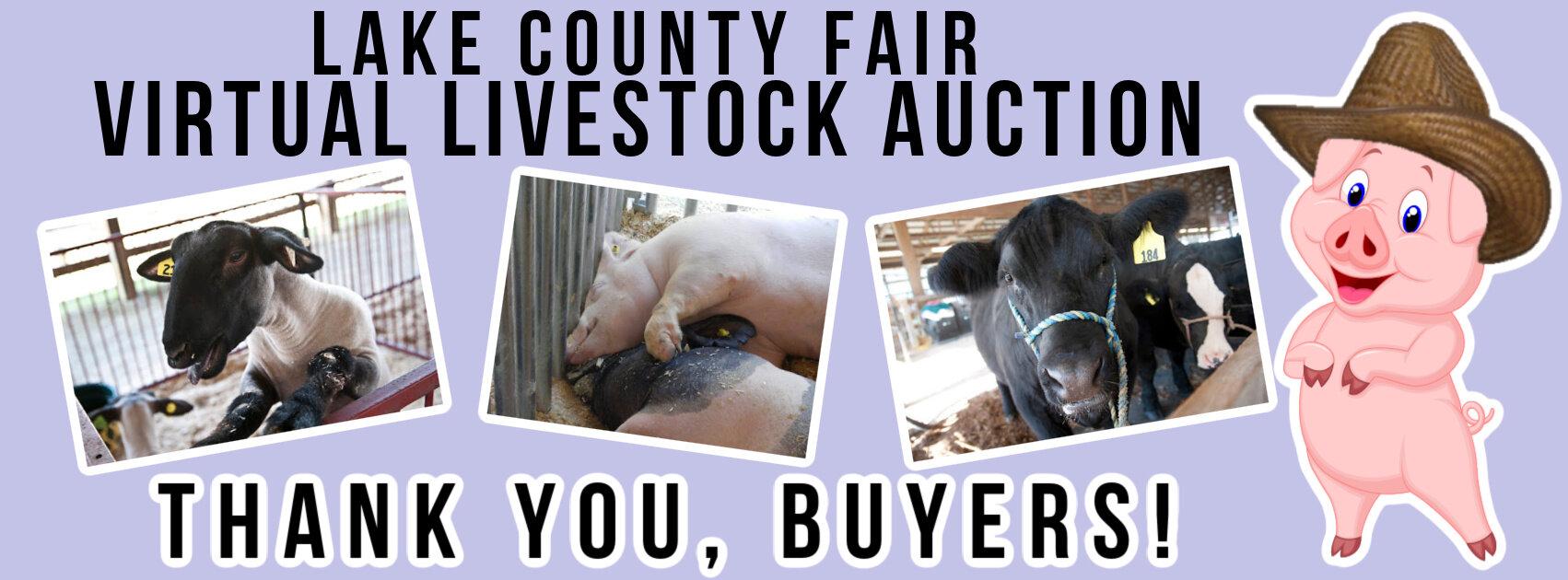 Virtual Livestock Auction Lake County Fair Grayslake Il