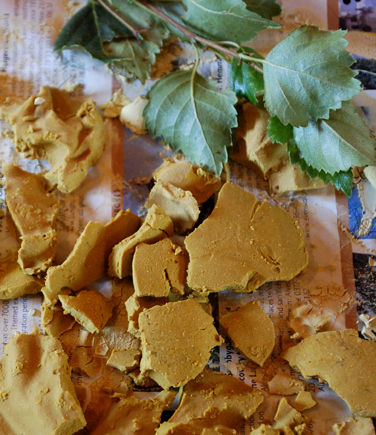 Yellow pigment made with birch leaves