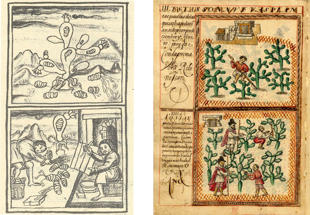 On the left is a page from the Florentine Codex (c. 1577) describing in Spanish and Nahuatl how the Nahua people made pigment from cochineal (nocheztli) harvested from prickly pear cacti (nopal). On the right is a page from the Cochineal Treatise (c. 1599) a Spanish document reporting on the potential exploitation of cochineal. The image shows a Spaniard overseeing the indigenous people in the cultivation and harvest of cochineal. The value of Spain's exploitation of cochineal in Mexico was second only to silver.