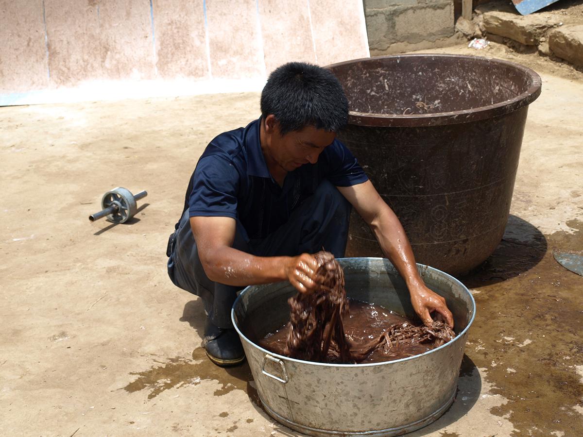 He Xiu Jun checking the retted bark.