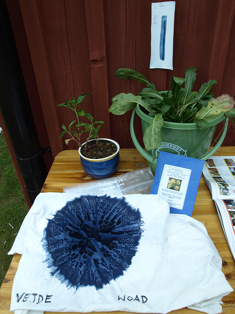 Woad pigment with a woad plant behind to the right.