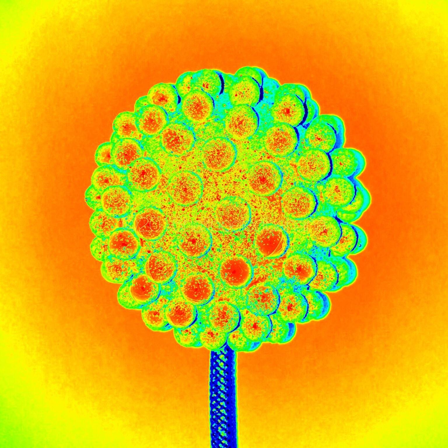 whoa! neon nubs flower print!!