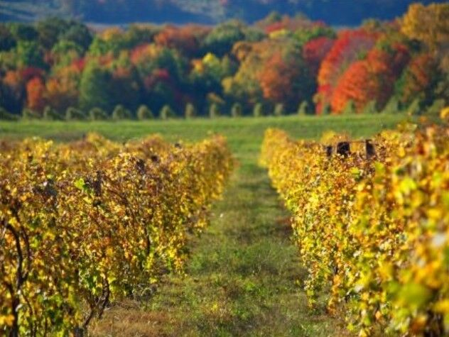 Photo courtesy of  Lake Erie Wine Country