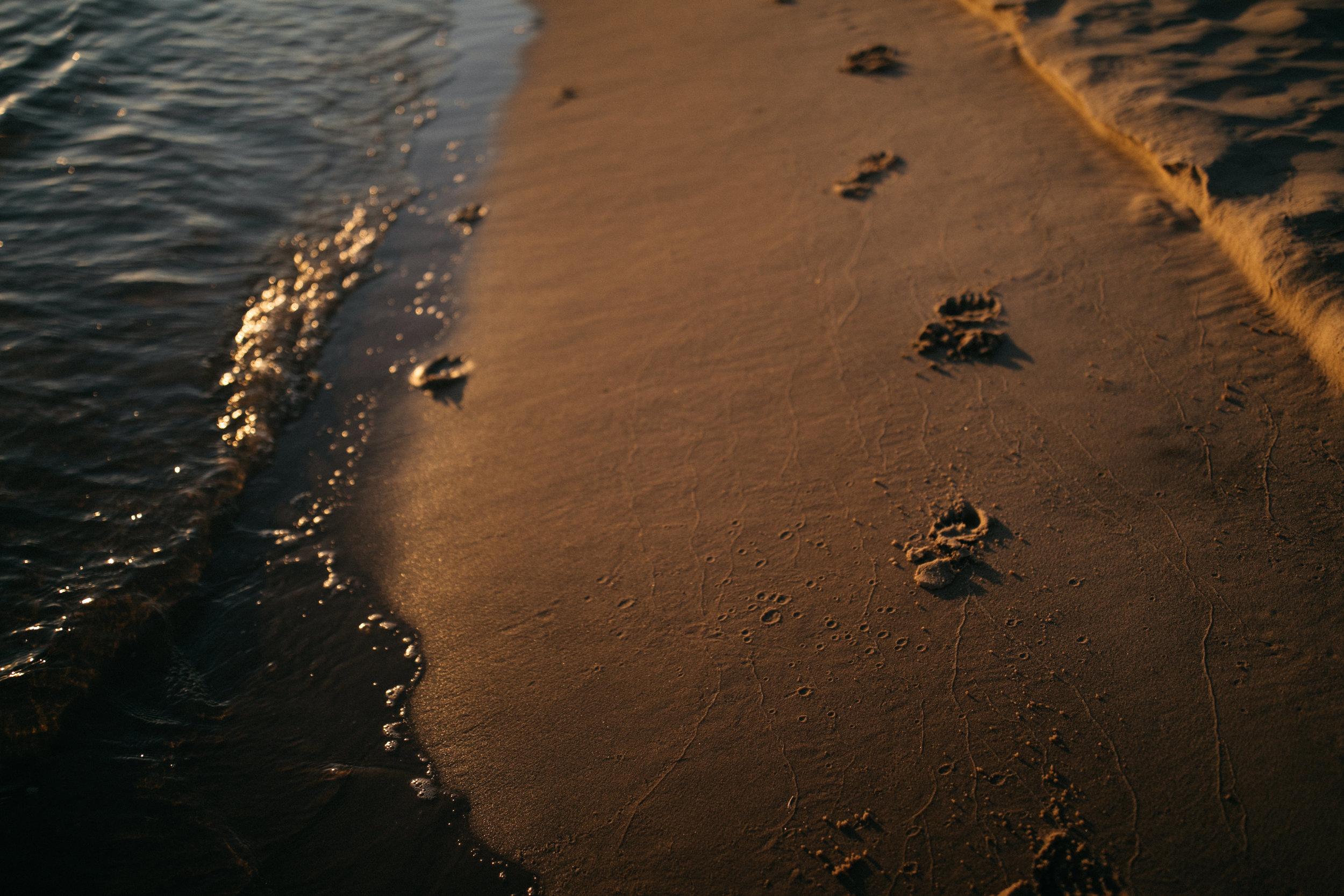 michigan-storytelling-photographer-ludington-beach-live-185.jpg