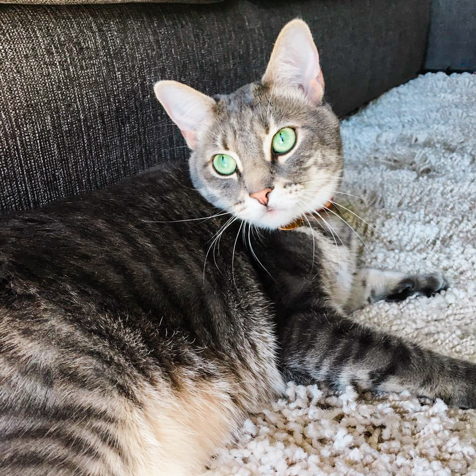 My Baby, Zoey
