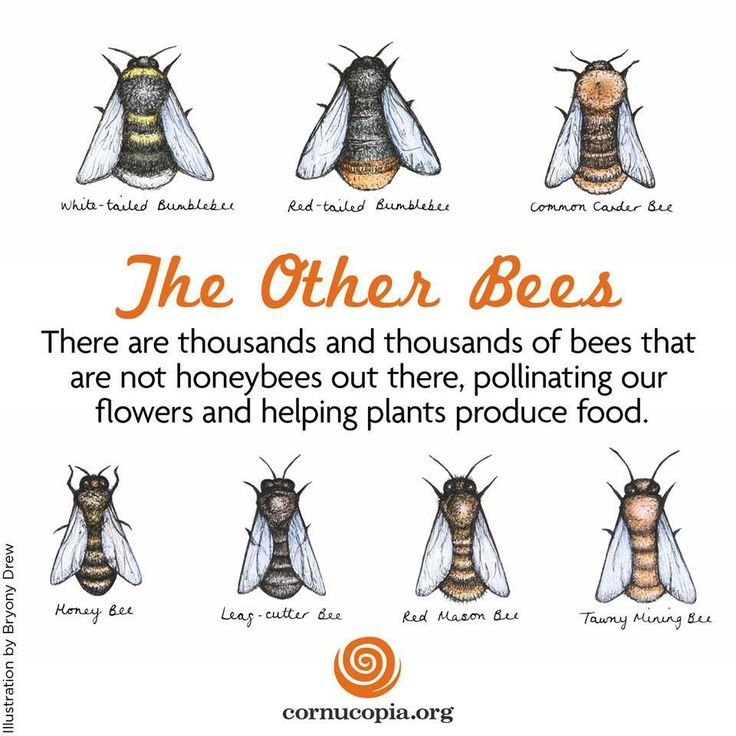 e2abfd4977e98cad524089ce76f47af6--save-the-bees-bee-keeping.jpg