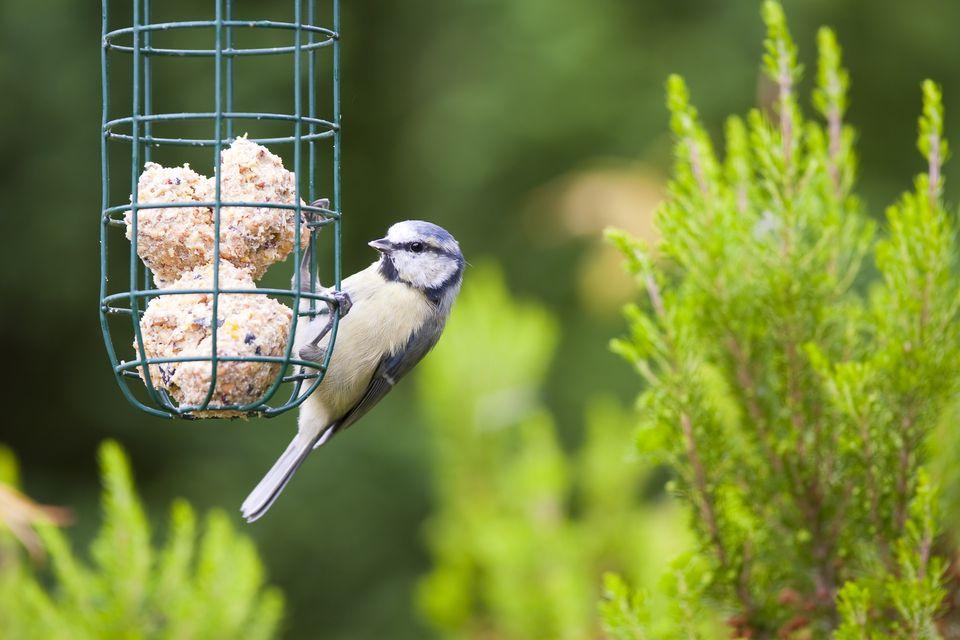 Birdfeeder-GettyImages-184377792-596c36593df78c57f4aa51e9.jpg