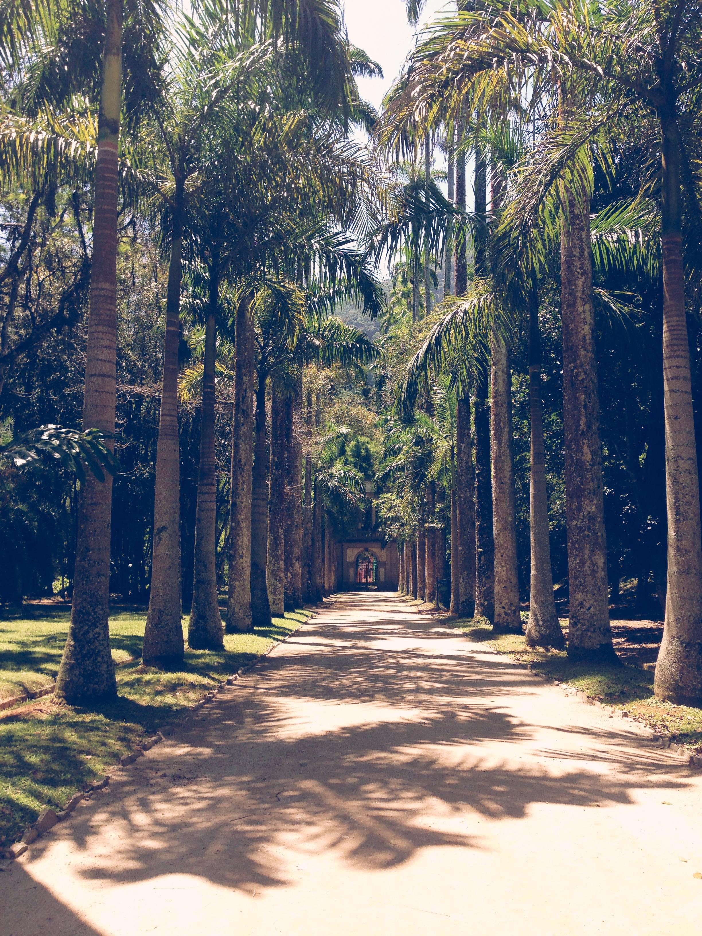 Jardim Botanico Rio de Janeiro.jpg