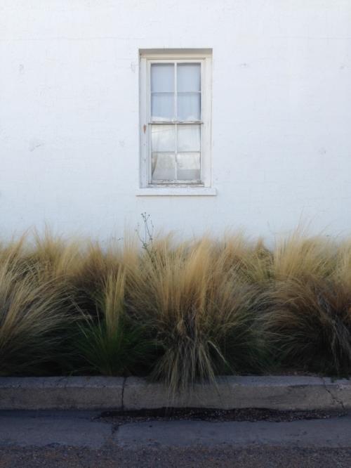 Marfa Grass 1 - Maleeha Sambur.jpg